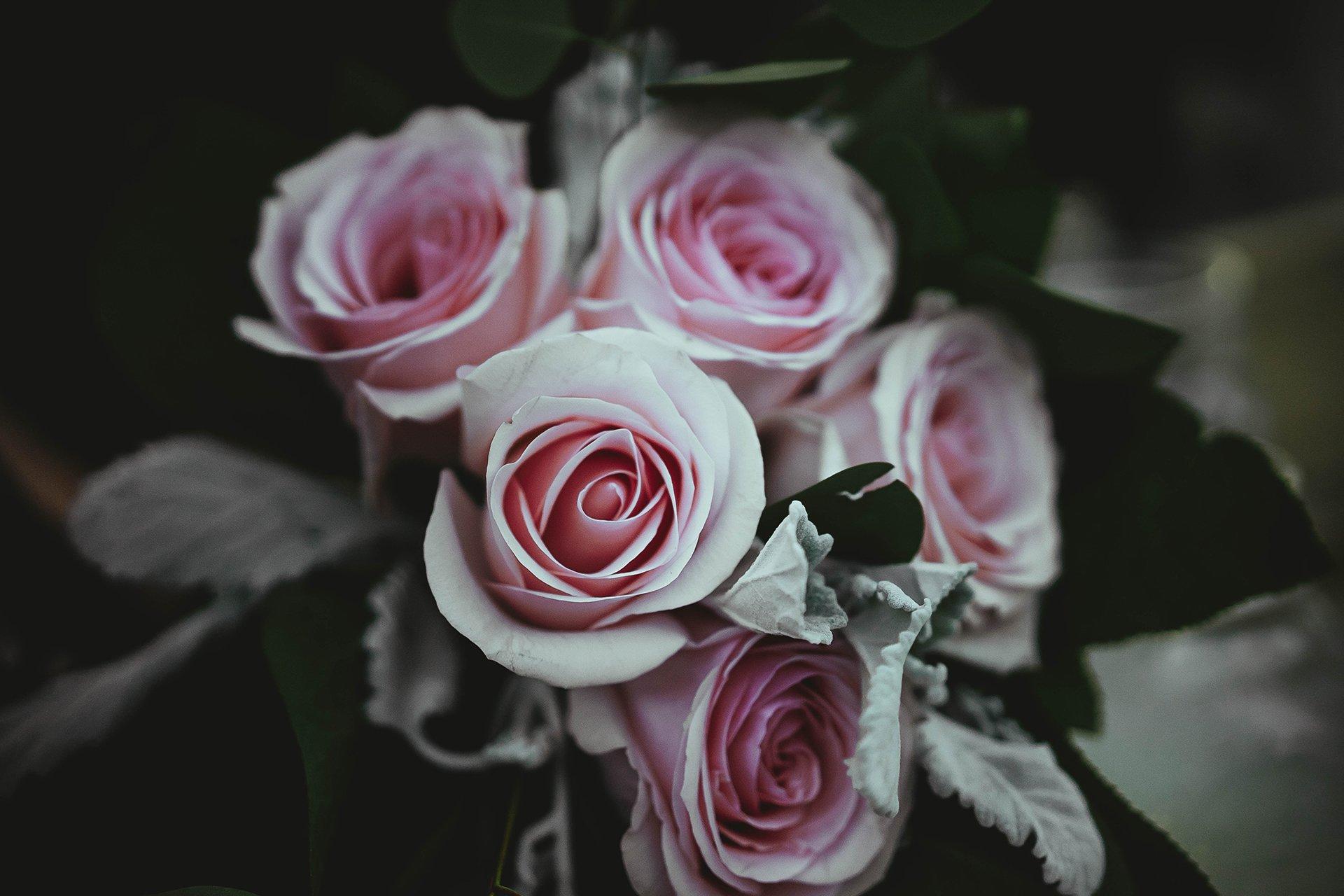roses-bg